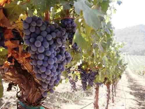 wines203.jpg