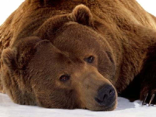 lifes_a_bear.jpg